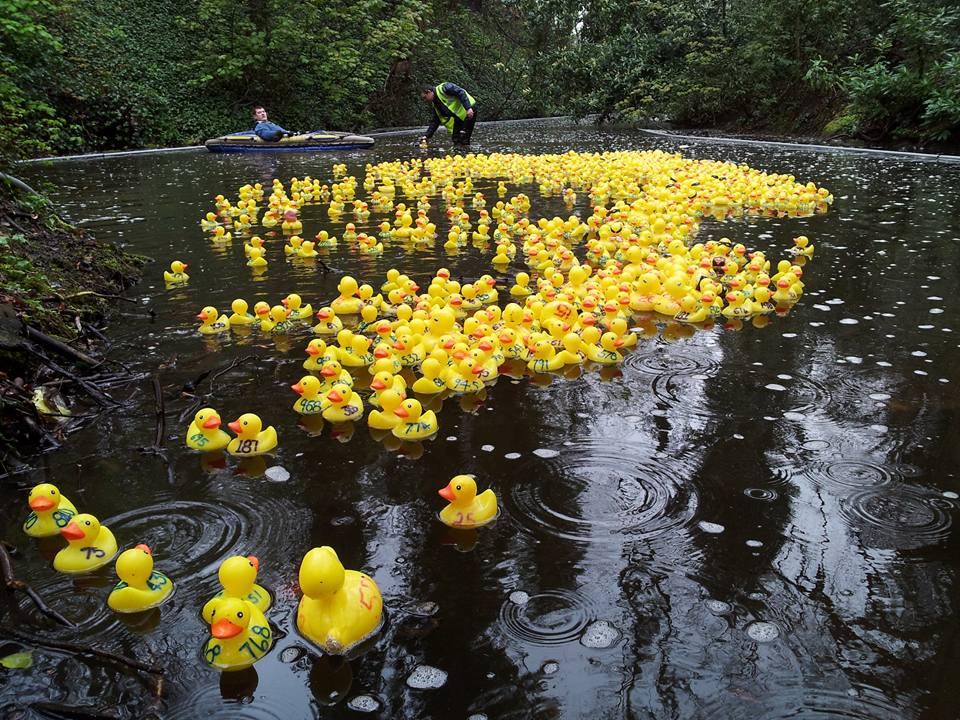 Ducks in the Dam